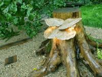 Дизайн садового участка своими руками 6 соток